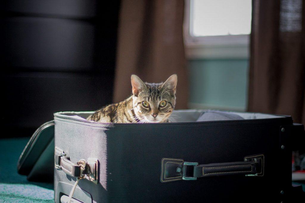 viajar con mascota en cabina o bodega de avión